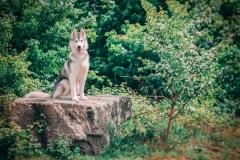 Hikdography_Mai-001