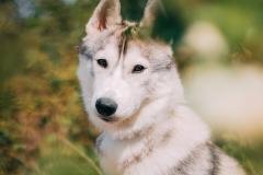 Hikdography_Mai-002