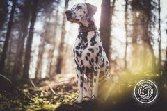 Hikdography_Outdoorshooting-015