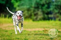 Hikdography_Outdoorshooting-040