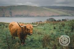 Hikdography_Schottland-017