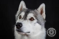Hikdography_Indoorshooting-004