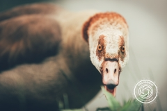 Hikdography_Wildlife-006