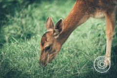 Hikdography_Wildlife-011